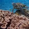 宮古島でウミガメシュノーケリング、ウミガメにあえるおすすめショップ