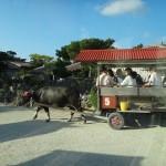 竹富島観光、水牛車やビーチを満喫♪
