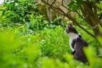 猫 迷子の探し方とおまじない。保護されていたり猫が帰ってきた神社も!