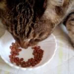 猫の糖尿病の原因のストレスから解放した結果と、この食事で尿路結石も良好です。