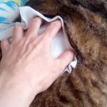 猫アレルギーは治る。症状や原因から克服した対処法♪