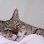 猫性格の変化や態度が変わってしまった時の対処。動物と話せるハイジの言う通りなんです。