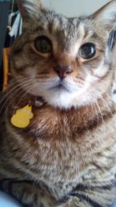 猫の糖尿病 今月の血糖値と治療法^^猫は人を癒し身代わりになる。