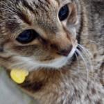 猫の膵炎の完治と治療費 糖尿病まで治るかもしれない不思議な事^^☆彡