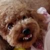 犬が不快で嫌いになる現実にポノポノと内観した結果^^☆彡