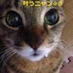 猫の糖尿病も病気も治る 原因は飼い主Σ(・ω・ノ)ノ!今回の治療法^^☆