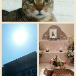 ペットロス猫の看取りという辛い現実をホ・オポノポノで変えていく方法^^☆