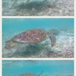 座間味島旅行記 ウミガメに逢える阿真ビーチはプラーナもオーブもいっぱい\(^o^)/☆