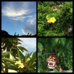 座間味島旅行記2 宿泊施設周辺と食事&古座間味ビーチ^^☆彡